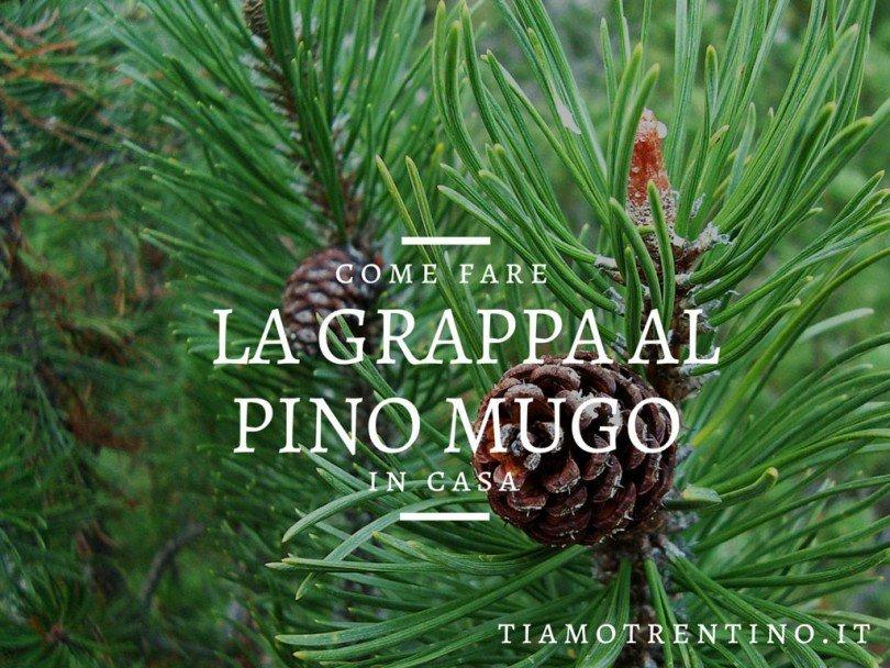 Come Fare La Grappa Al Pino Mugo Ti Amo Trentino
