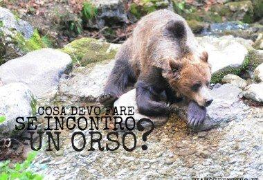 cosa devi fare se incontri un orso ti amo trentino