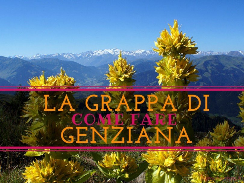 come fare la grappa di genziana in casa