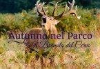 cervo-il-bramito-in-autunno